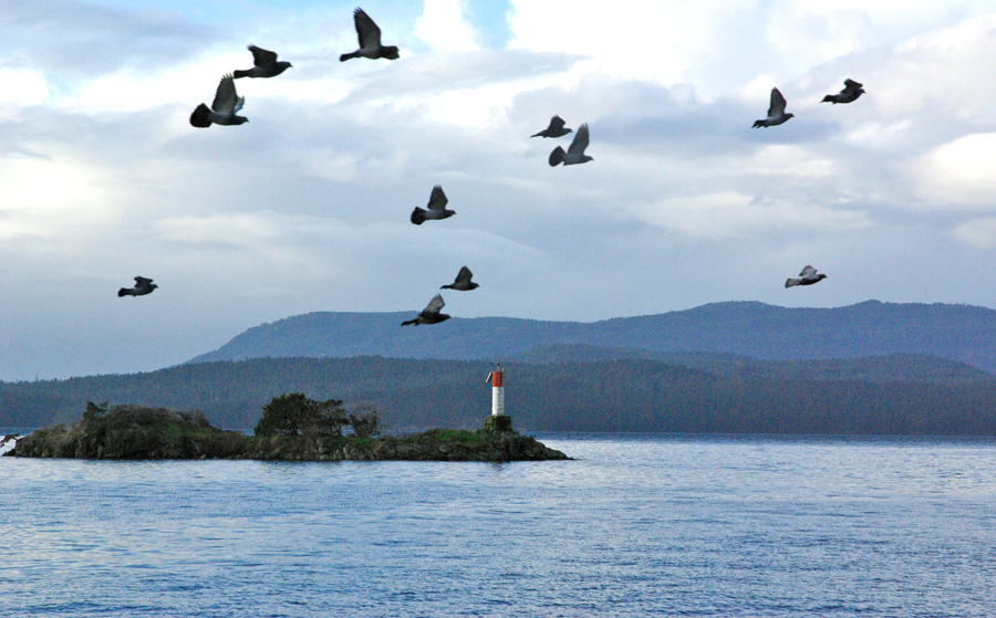 Boat Islet Light at the entrance to Port Washington on North Pender Island, British Columbia