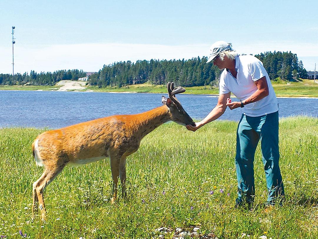 Benoit's friend Robert feeding deer on Anticosti Island