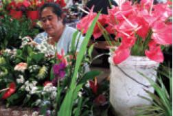Flowers in Tonga